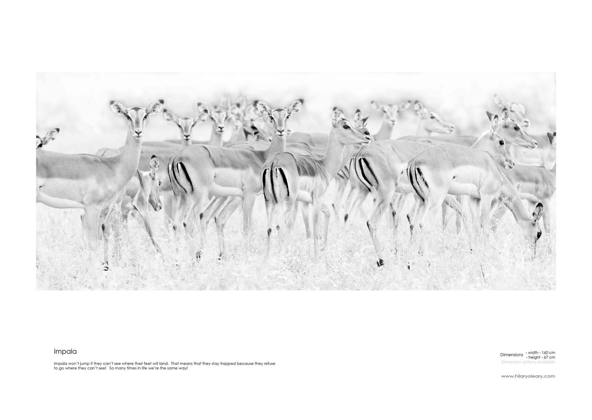 16 Impala.jpg