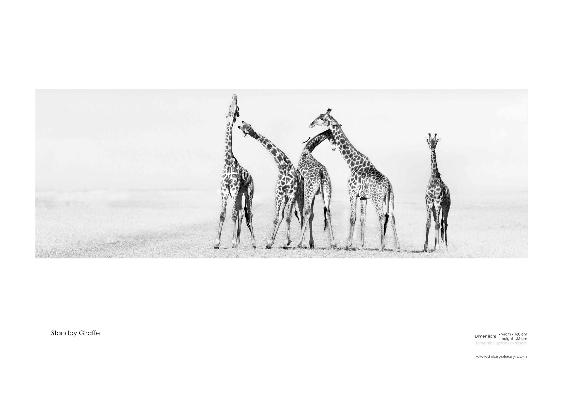 25 Standby Giraffe.jpg