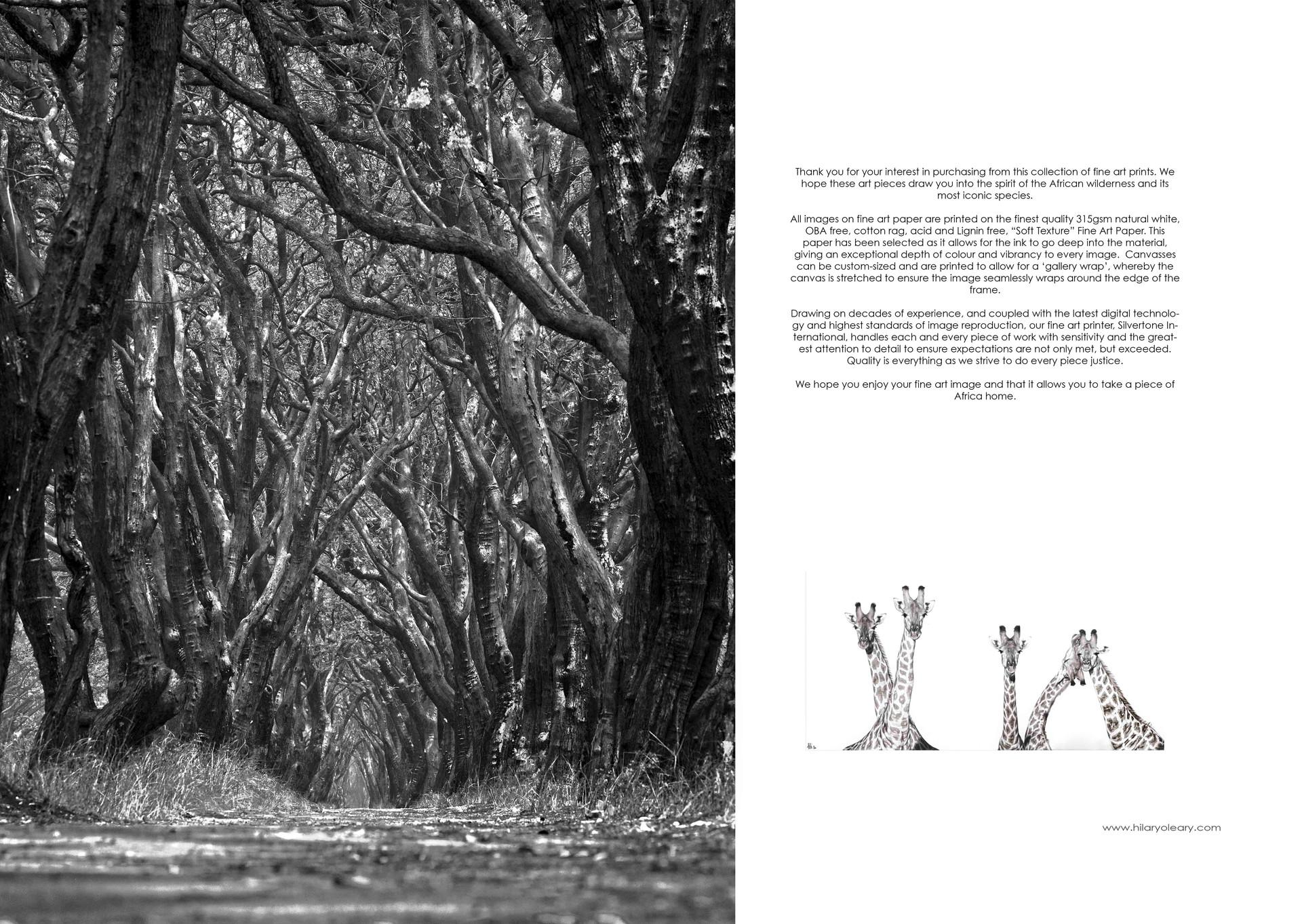 46 print details 2.jpg