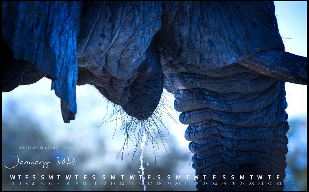 January_Blue Elephant_Low Res.jpg
