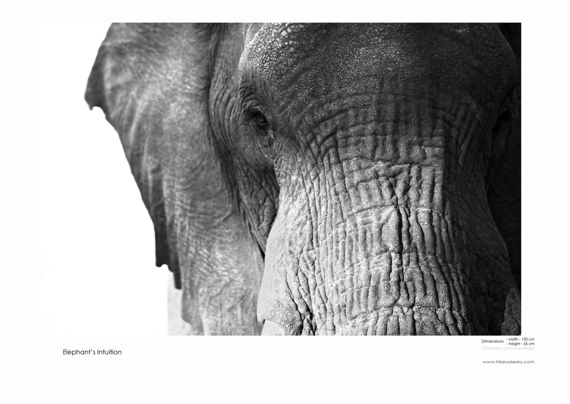 39 Elephant Intuition.jpg