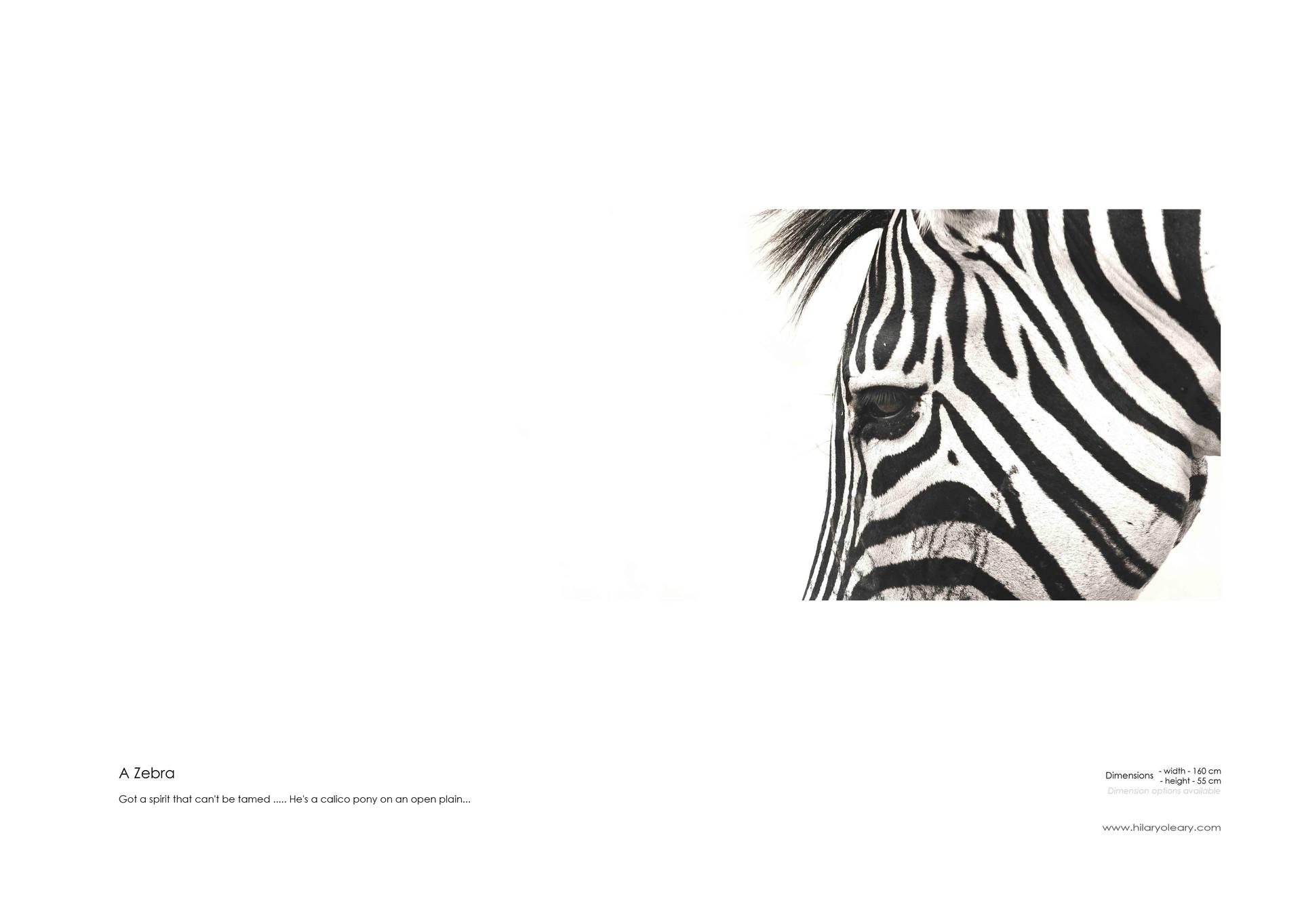 26 A Zebra.jpg