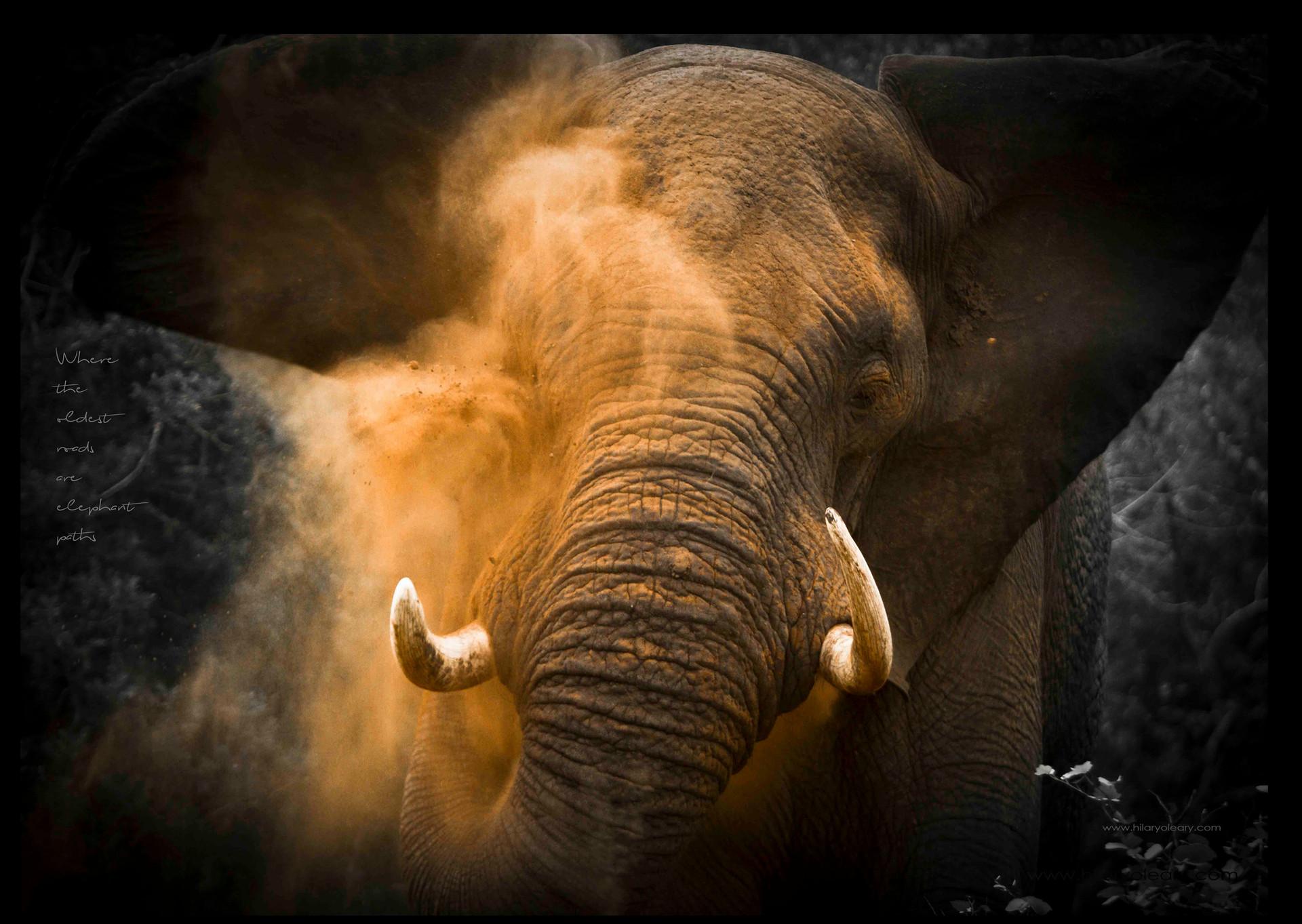 23 elephant paths.jpg