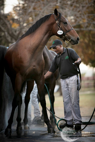 The 2017 Thoroughbred Yearling Sales