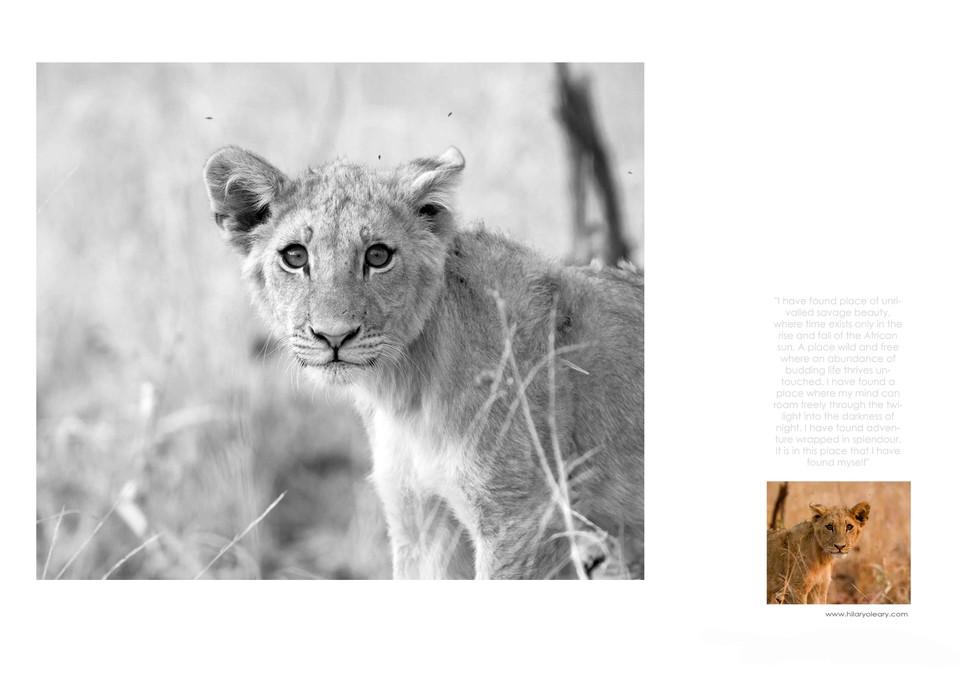 44 Lion Cub.jpg