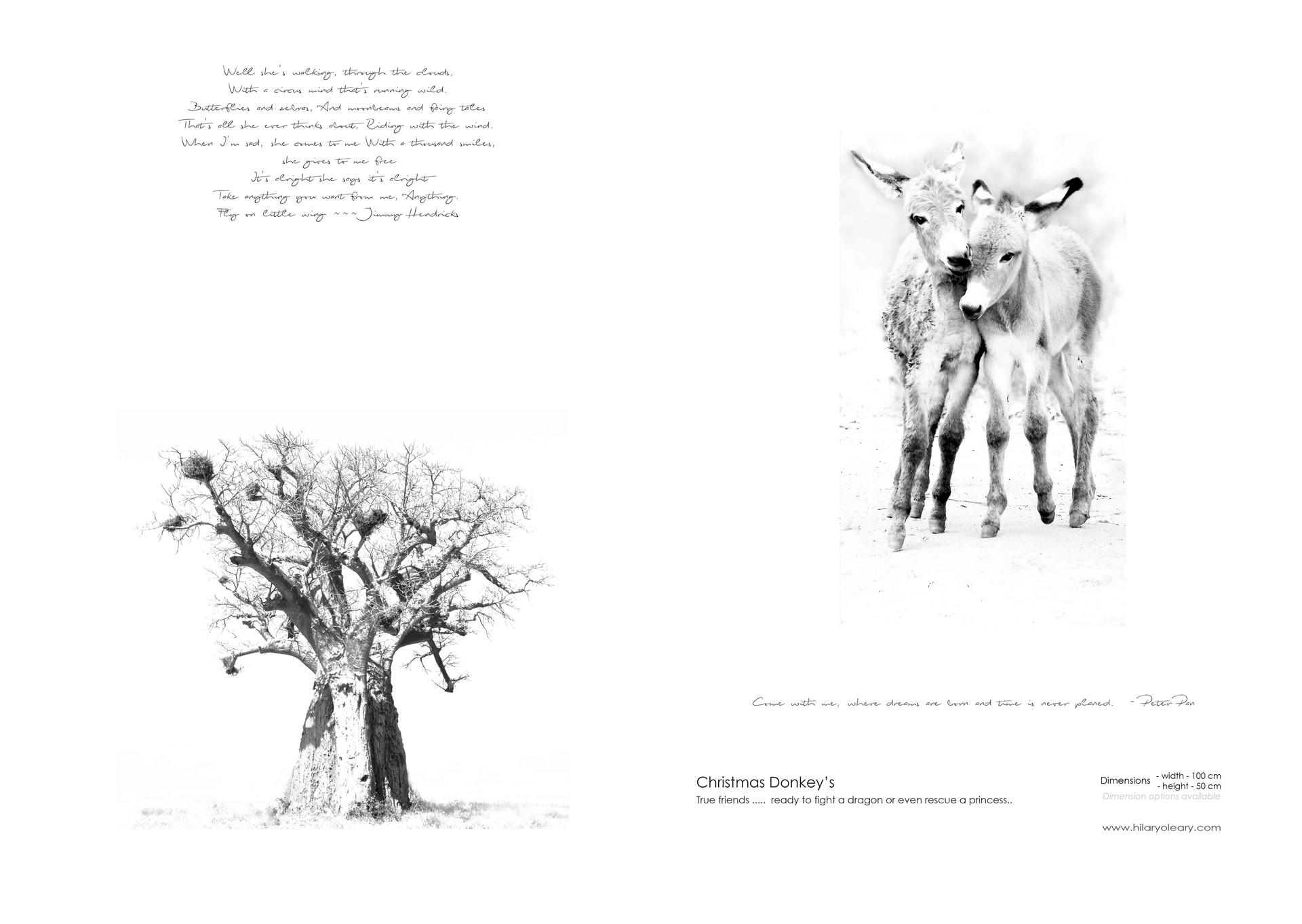 33 christmas donkeys.jpg