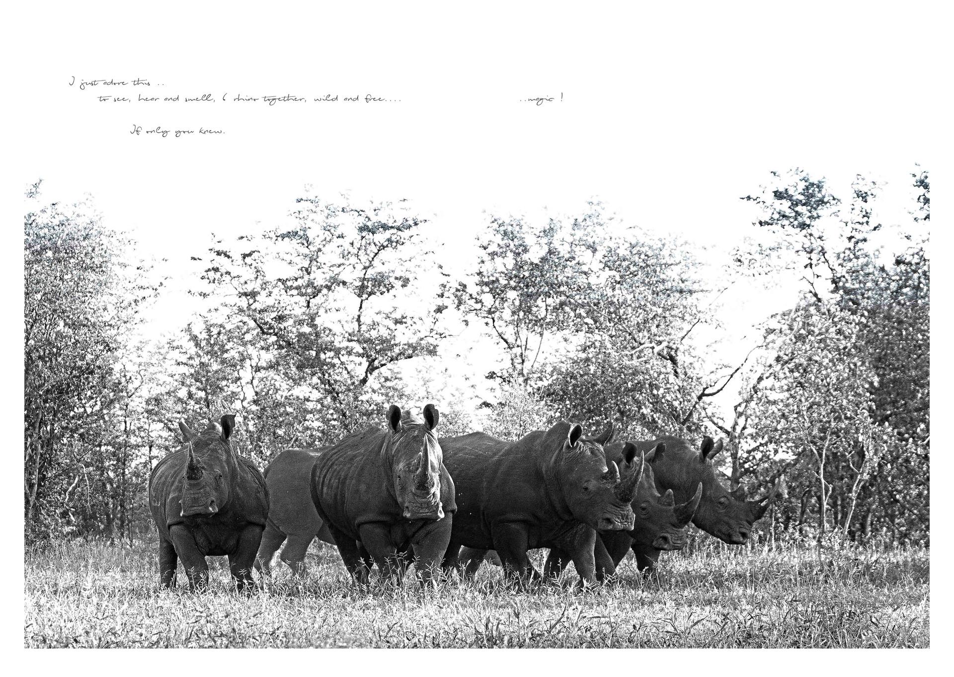29 rhino page.jpg