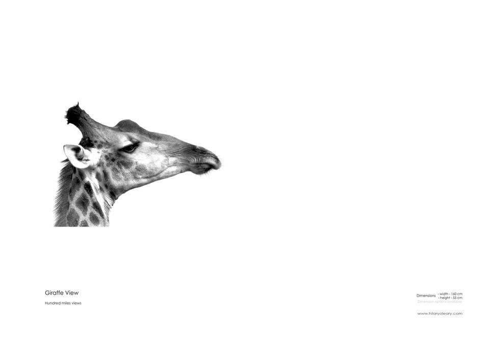 8 Giraffe View.jpg