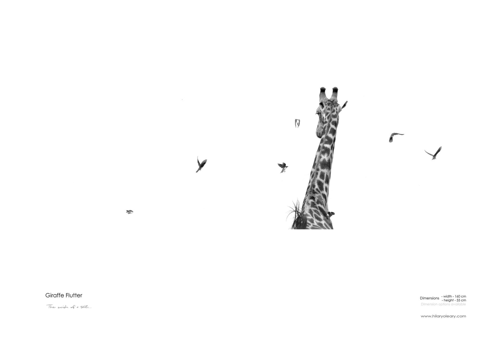 9 Giraffe Flutter.jpg