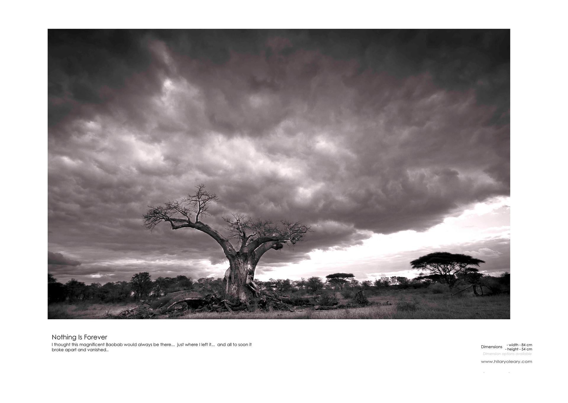20 baobab.jpg