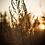 Thumbnail: Fotografování