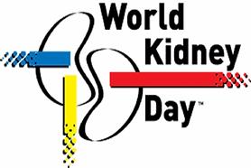 kidney_571_855.png