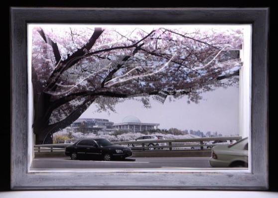 꽃피는 봄이 오면 Cherry Blossom Festival in Yeouido, Seoul