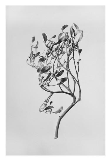 Flowers BW (1 von 2).jpg