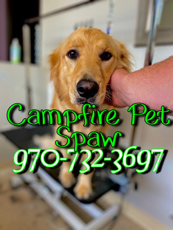 Campfire Pet Spaw