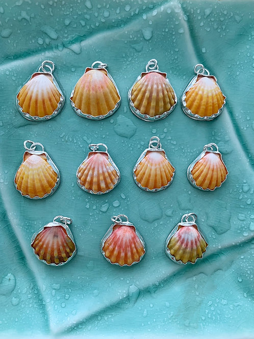 Original Sunrise Shell Necklace