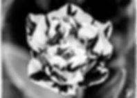 _MG_9237-Edit.jpg