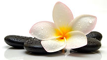 flower-plumeria-stone-drops-spa-wallpape