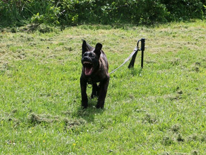 Charity 'Stop Poaching Now' to sponsor Anti-Poaching Dog for Tanzania