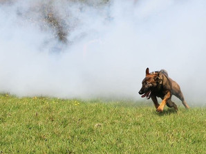 Anti-Poaching Dogs under take Smoke Grenade training