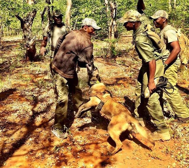 Shetani in Zimbabwe