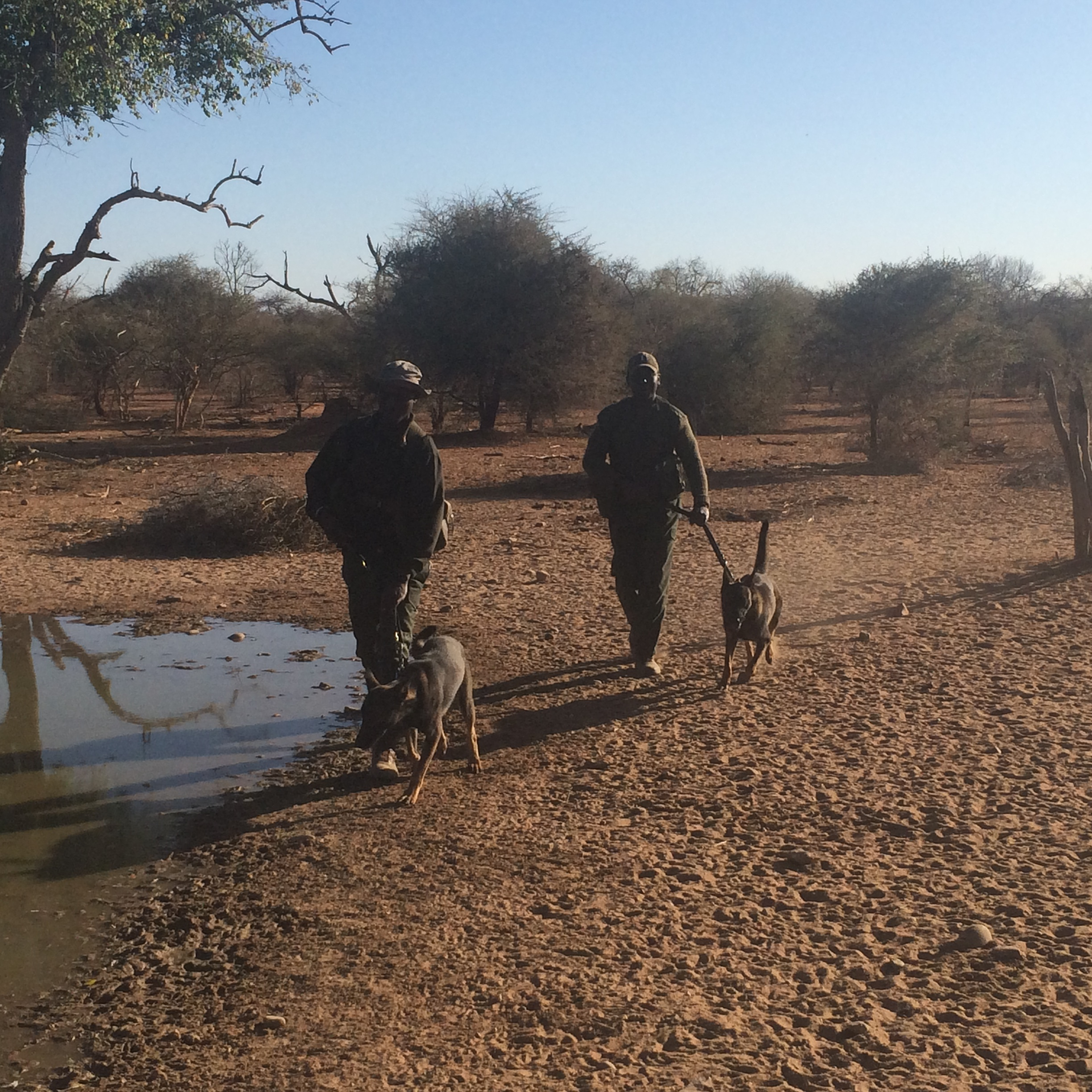 On patrol by the waterhole