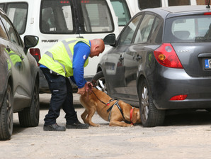 ASA trained cash detection dog finds 39,000 undeclared euros in one day
