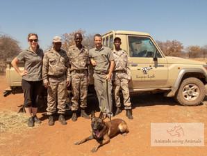 'Savas' arrives at Limpopo-Limpadi Reserve, Botswana