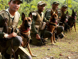 ASA returns from training K9 tracker teams in Assam,India