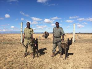 Chuilexi Handlers pass basic Anti-Poaching Dog course