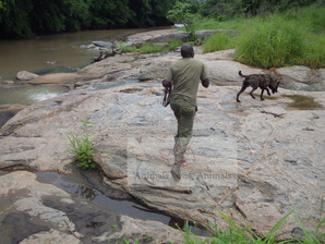Leo & Knox receive tracker training in Mozambique