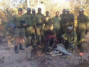 Dogs assist in Poaching attempt at 'Save Valley', Zimbabwe