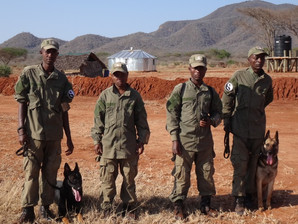 'Bo & Freddy' take up their anti-poaching duties at Mkomazi National Park