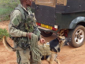 Training with Mkomazi Dog Section Tanzania