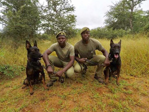 Tracker Dog Team foil Rhino Poaching attempt at Save Valley Conservancy
