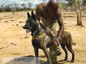 ASA carries out continuation training with Chuilexi Conservancy dog section