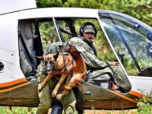 Anti-Poaching dog 'Justice' deploys to Zimbabwe
