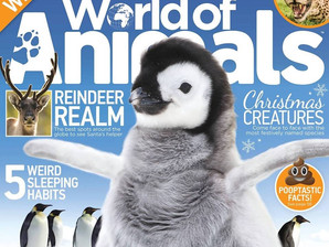 A.S.A to feature in the December 2017 issue of 'World of Animals' magazine