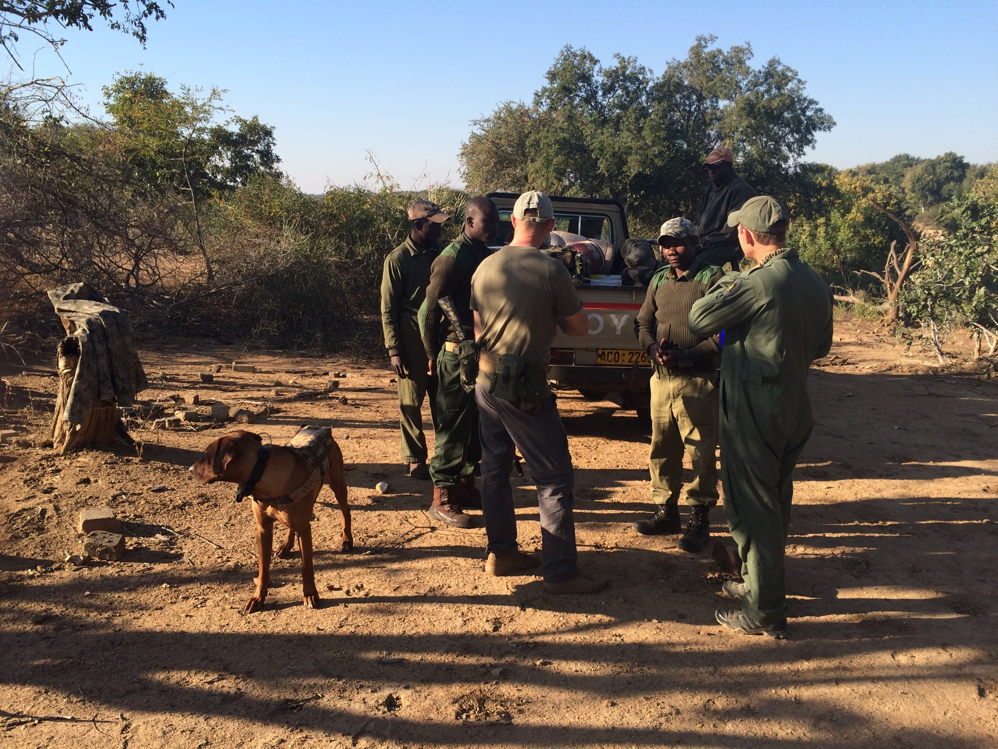 Rhino tracking dog