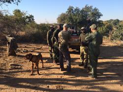 Rhino tracking dog