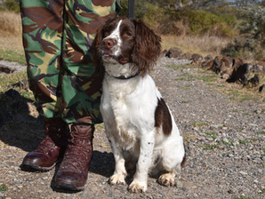 Detection Dog Drum is deployed to the Ol Pejeta Conservancy