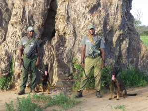 Save Valley conservancy dog section have successfully completed their training and are now operation