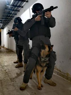 Tactical K9 Movement training