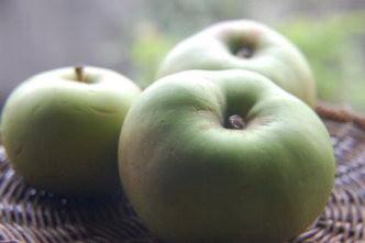 私の著書「幸福なイギリスの田舎暮らしをたずねて」(集英社)ではブラムリーについて1章を設けて書いていますが、ブラムリーはイギリスの料理用リンゴを代表する品種です。