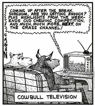 Cows watching TV.jpg
