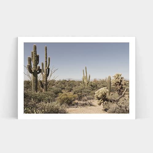 A1 Print - Desert