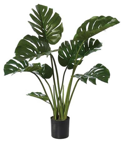 Potted Monstera Plant Mood Nz