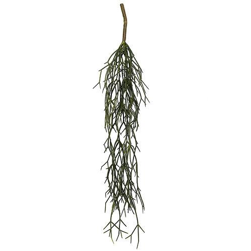 Mistletoe Cactus Vine