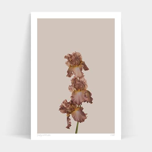 A1 Print - Just Bloom