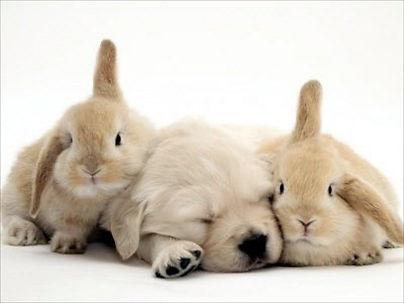 Cosmétique non-testé sur les animaux